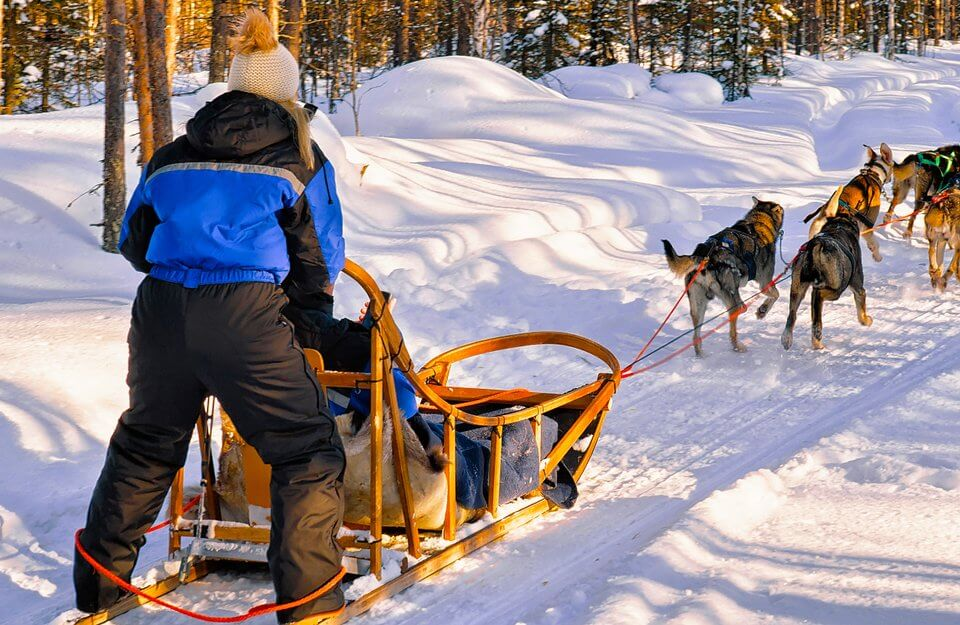 dog sled delivery