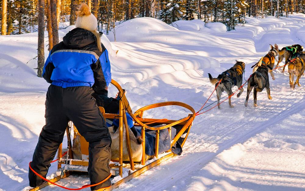 dog sled delivery